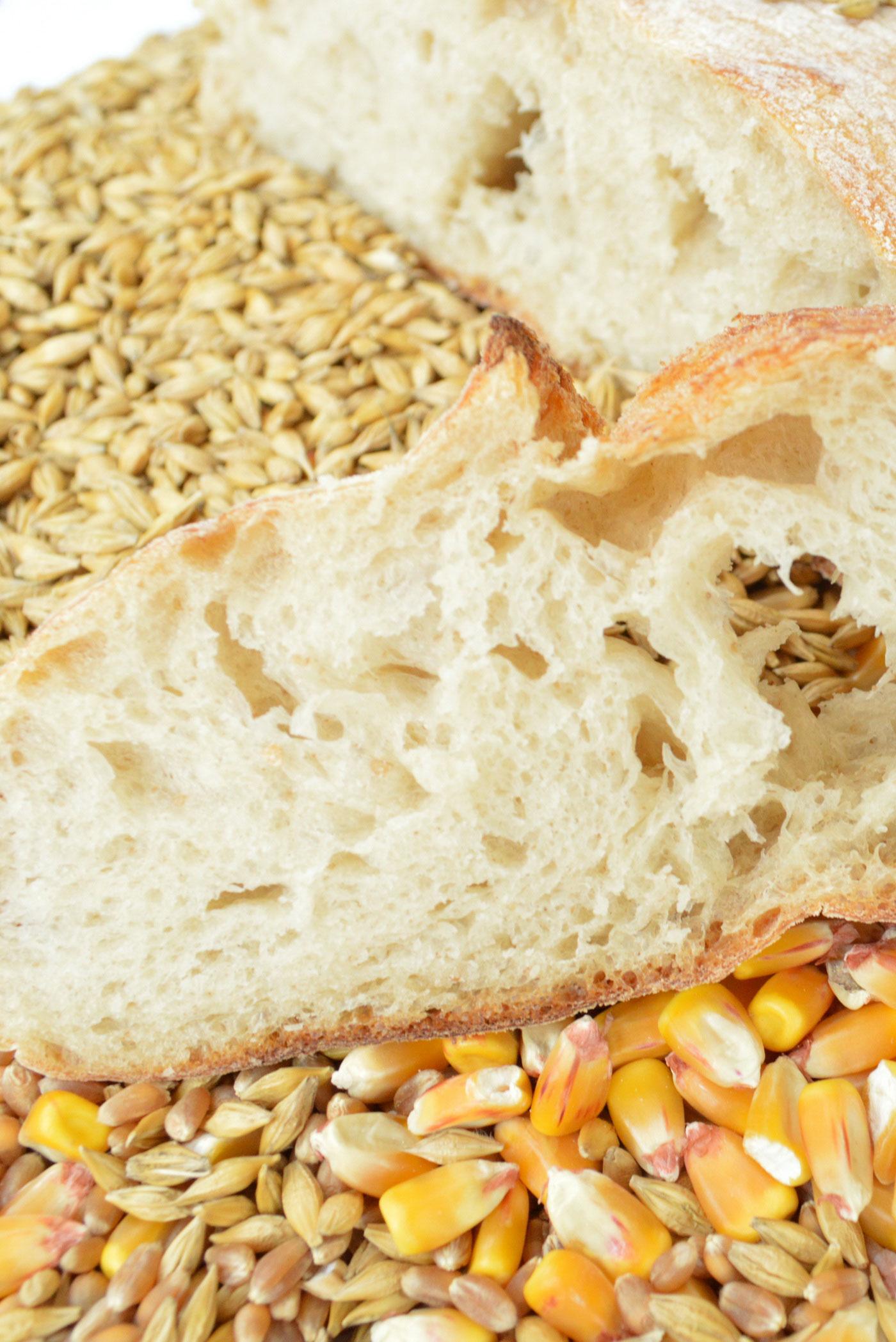10 Major Protein Sources for Vegans