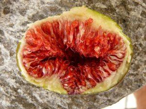 Myth about Aphrodisiac Foods