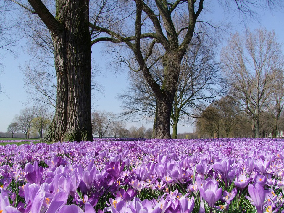 History of Saffron - the world's most expensive spice