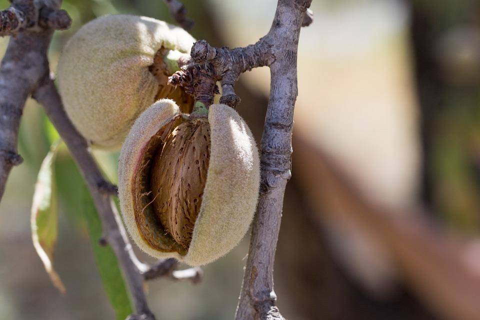 8 Health Benefits of Almonds