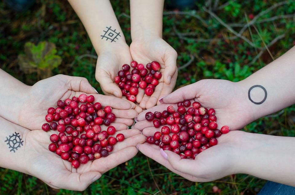Magic Berries - Cranberries