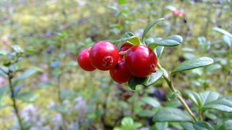7 Health Benefits of Cranberries