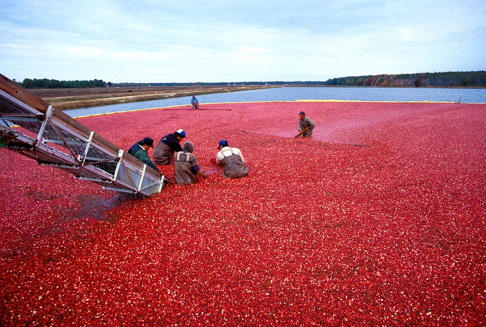 7 Health Benefits of Cranberries