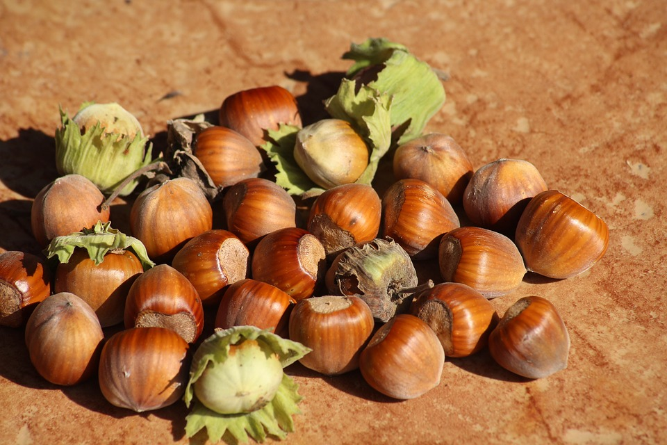 Reasons to Include Hazelnuts to Your Daily Menu