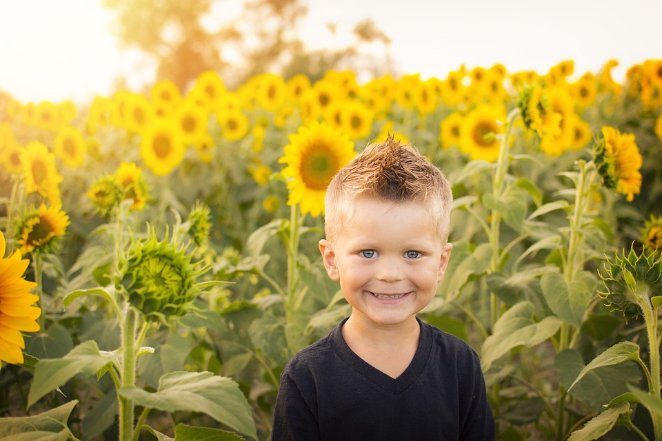 3 Major Health Benefits of Sunflower Seeds