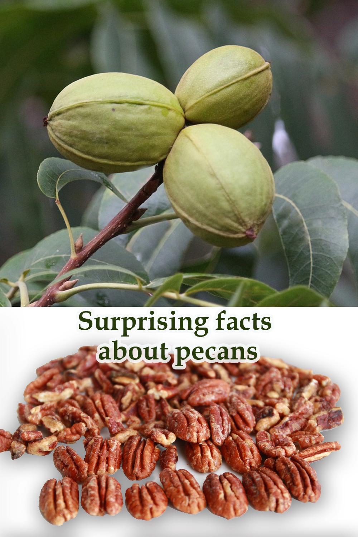 7 Health Benefits of Pecans