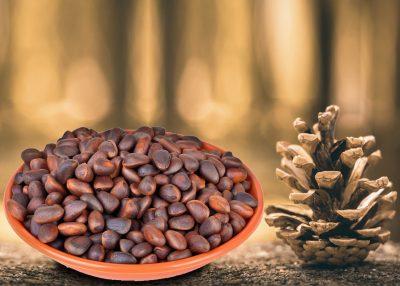 Hidden Health Benefits of Underappreciated Pine Seeds